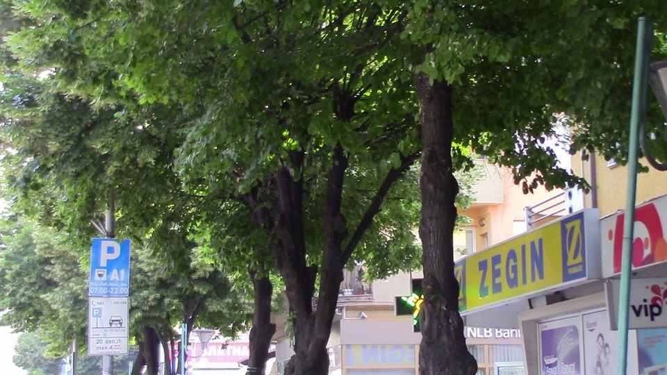 kastrenje-drvja-05