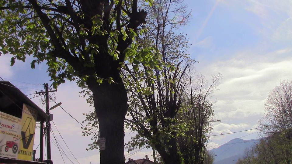kastrenje-drvja-04