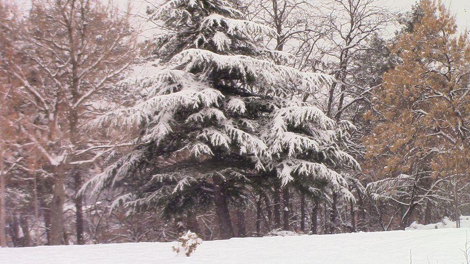 sneg-mogila-19