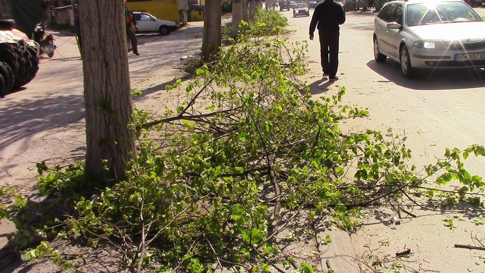 kastrenje-drvja-02