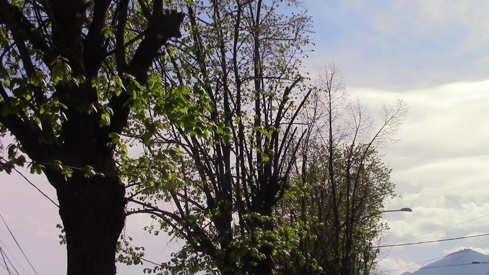 kastrenje-drvja-03