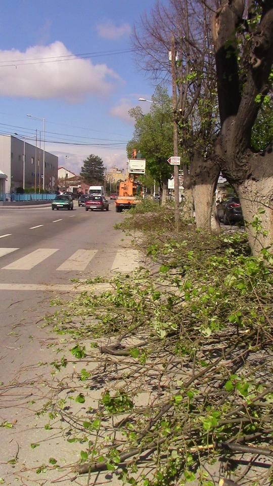 kastrenje-drvja-09
