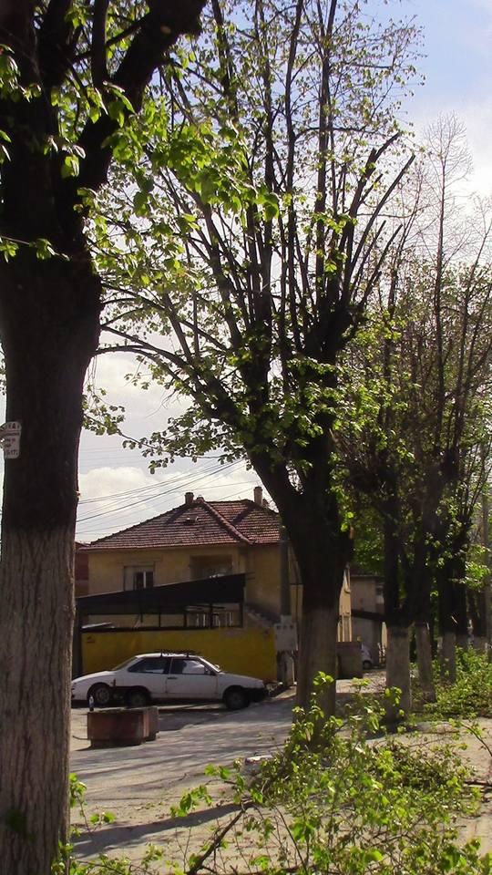 kastrenje-drvja-10