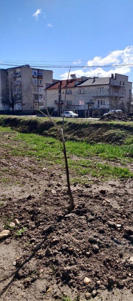 iskrseni-drva-11