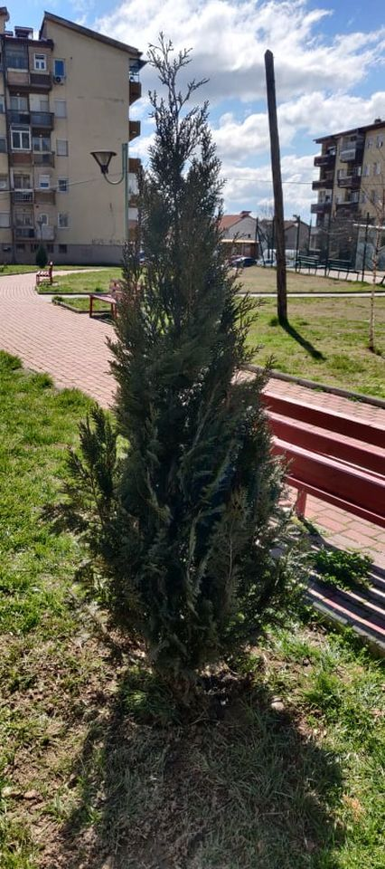 iskrseni-drva-12