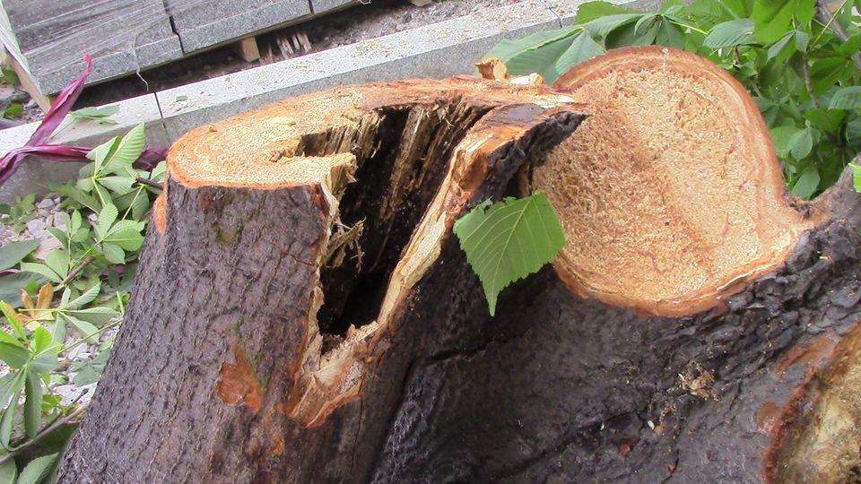 stari-drva-06