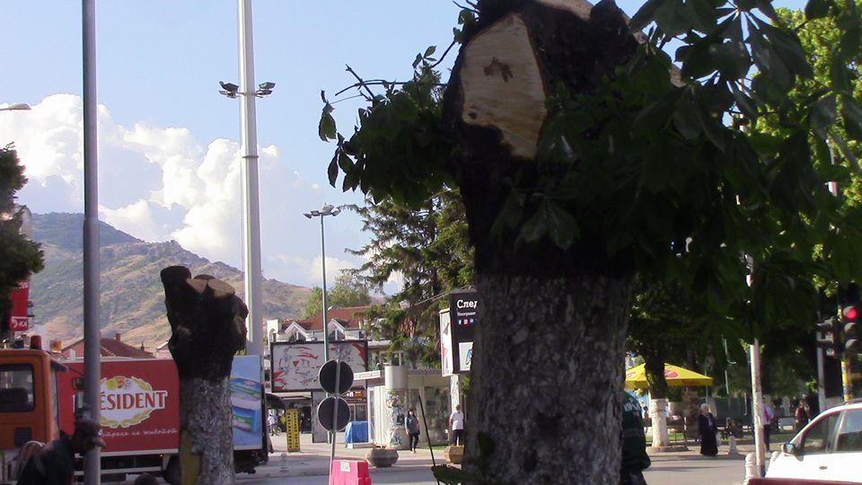 stari-drva-15