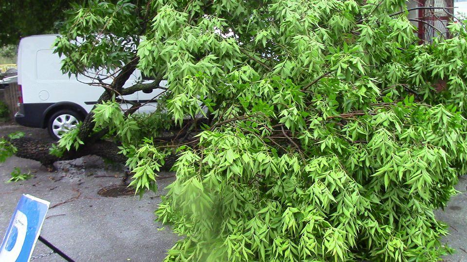 stari-drvja-08