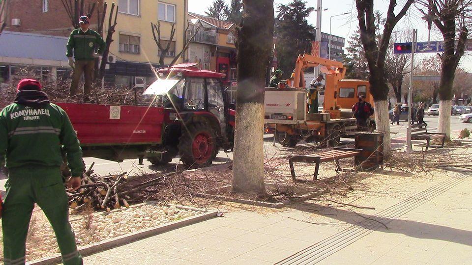 kastrenje-drvja-08